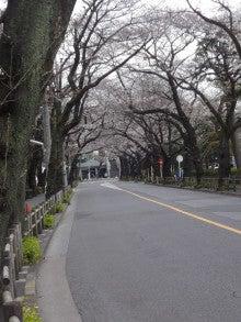 160327ムサリク桜1
