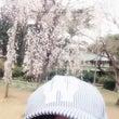 春だよー♪