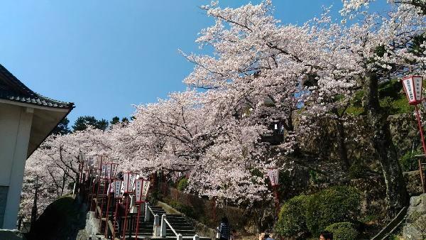 お城の入り口から桜が咲き誇ります
