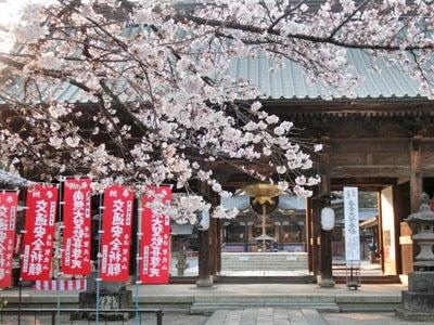妻沼聖天山桜2016