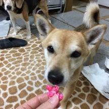 桜ポップコーンと桜キ…