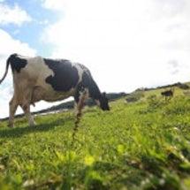 「牛と草と牛乳のお話…