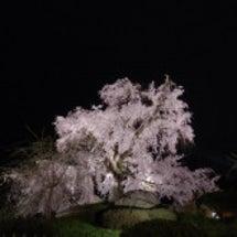 2016 京都 円山…