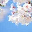 春の暖かい日差しを楽…
