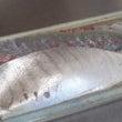 シマアジの刺身。大特…