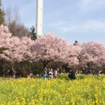 春になりました。