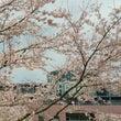 花咲け春の日