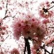 花曇りの午後@東大阪…