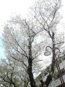 2016年二子玉川桜並木