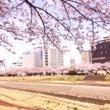 桜を見に行ってきまし…