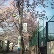 桜がきれいでした。