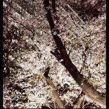お花見☆★