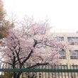 4月、過ぎゆく春…。