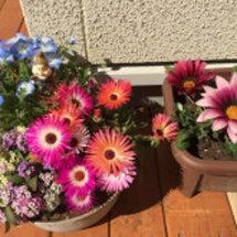 お花は素敵