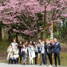 桜満開 春爛漫?