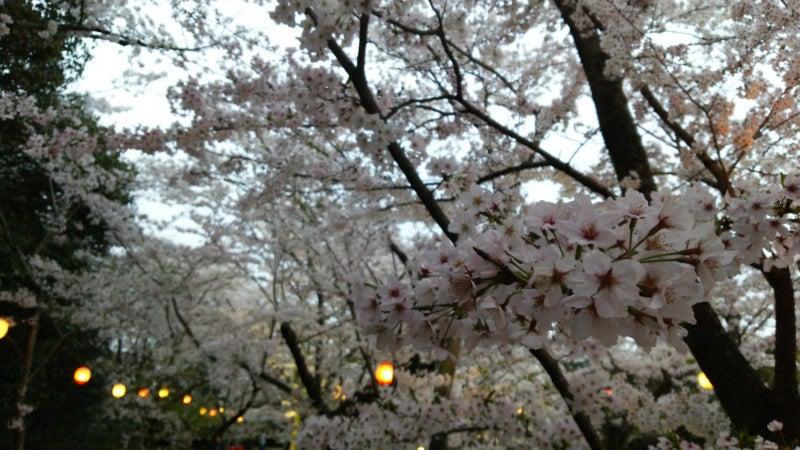 栗林公園の満開の桜