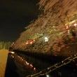 『夜桜屋形船』開催し…