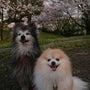 桜と写真。