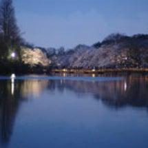 井の頭夕景