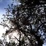 散りゆく桜を見る度に…