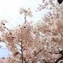 桜とこのみ撮影会^^