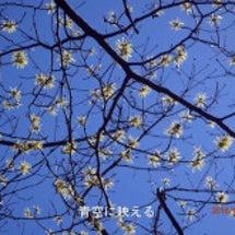 花見登山、マンサク咲…
