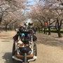 散るも桜  カート編