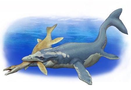 捕食するモササウルス