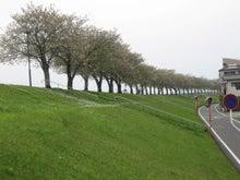 よく利用する堤防下の道