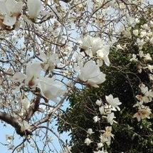4月の俳句
