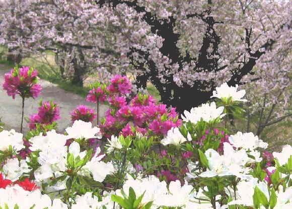 熊本里山の春