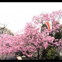 お花見 その2☆★