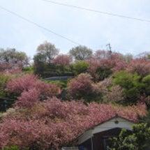 八多喜 祇園公園