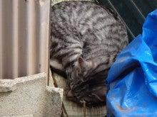 土手の近くの猫1