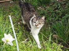 土手の近くの猫2