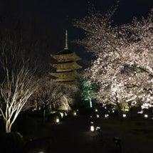 京都 東寺の夜桜