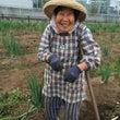 陽春の吉田農園 花真…