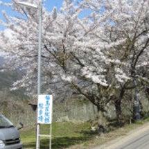 福島屋旅館だより 桜…