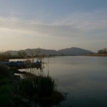 高級魚☆琵琶湖ホンモ…