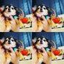 Rich Dog♡犬…