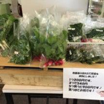 野菜がたくさん採れて…