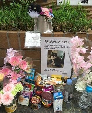 Blog0243-02ナナツモリ・ブランドノワー