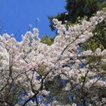 4月のお庭2