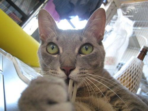 ペットの写真でつくるエコバッグ