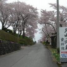 桜だより(^^♪