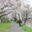 ☆桜&菜の花☆