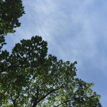 新緑×青空