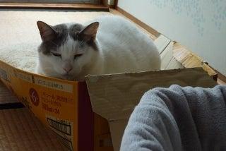 猫ベッド、ダメ?