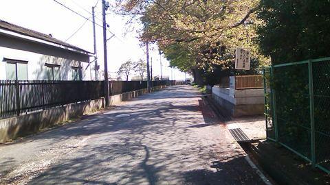 江戸川へと続く道
