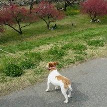 ここにも春が